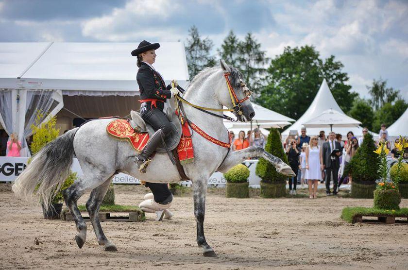 Stadnina Koni Ferenstein pokaz koni andaluzyjskich