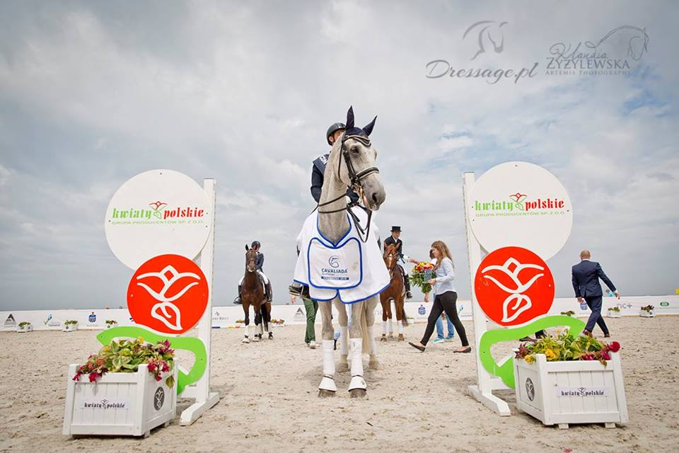 Want Have It 2016 Cavaliada Summer Dressage