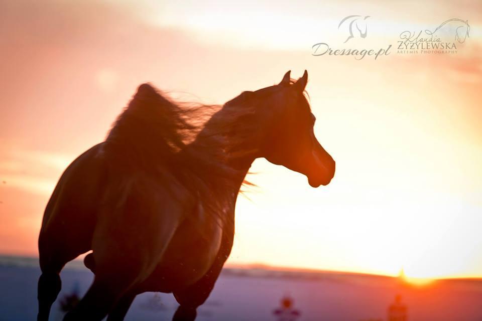 Want Have It Cavaliada Sunset