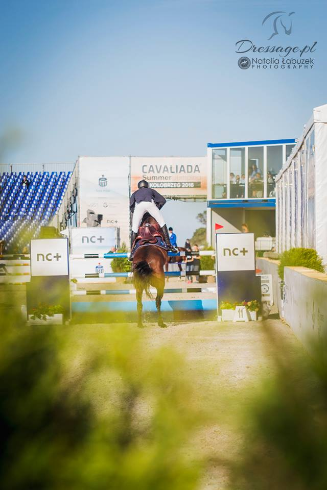 Want Have It Show Jumping Cavaliada