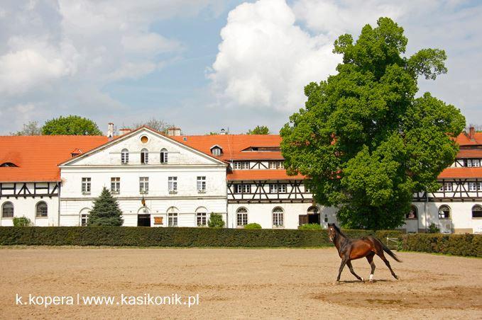 Zamek Książ Stado Ogierów